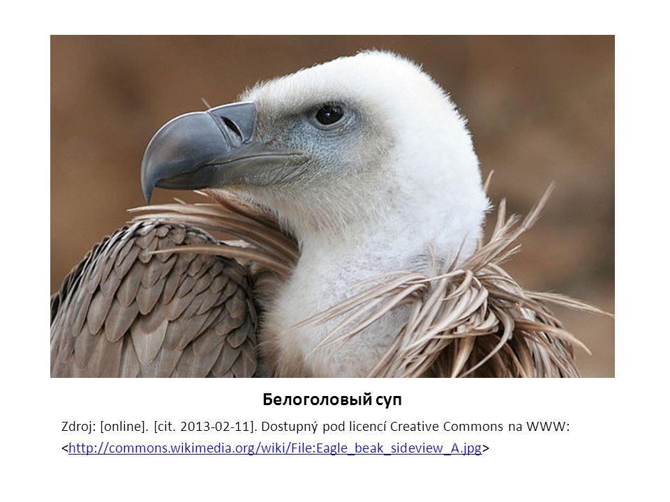 Белоголовый суп Zdroj: [online]. [cit. 2013-02-11]. Dostupný pod licencí Creative Commons na WWW: